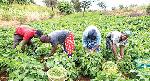 Farmer bemoans delayed rainfall, warns of food scarcity
