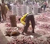 Onion traders in Kano market