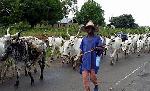 Delta state: Herdsmen reject 5,000sqm grazing land, demand 30,000 sqm for each local govt