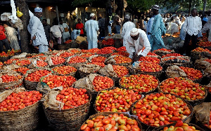 Tomato Farmers 1