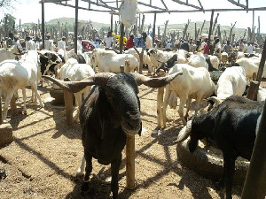 A ram farm somewhere in Nigeria