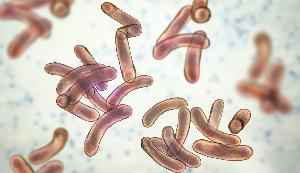 72,910 suspected cholera cases recorded