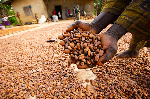 Cocoa growers ask Buhari to stop farmers' killing by herdsmen