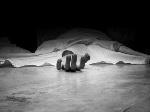 Mrs Suwaiba Shuaibu, 20, killed her teenage rival