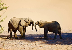 Namibia is home to a significant population of Africa's elephants. Photo Credit: Change.org