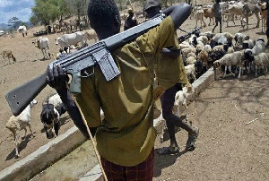 A armed herdsman and his cattle.