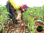Kogi women farmers decry poor budgetary allocation to agriculture