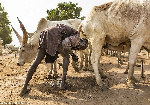 Meet the Mundari people of South Sudan who bathe in urine of cows to keep themselves clean